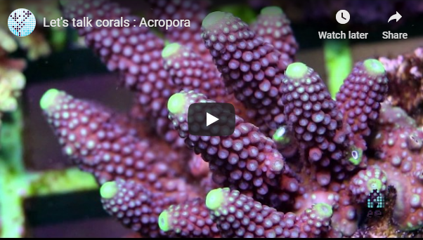 Lets talk Acropora!